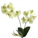 Phalaenopsis, length 40cm, light green